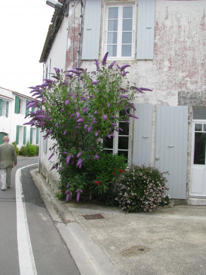 ile-de-re-14-juillet-2009-020.jpg